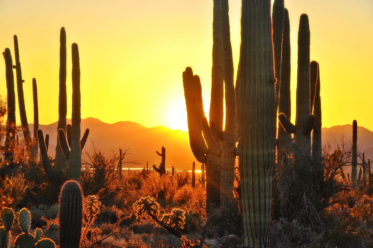 Photograph of an Arizona desert, during sunset. Image portrays several Saguaro cacti, with mountains in the background.